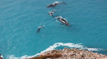 520202-whales-at-the-bight